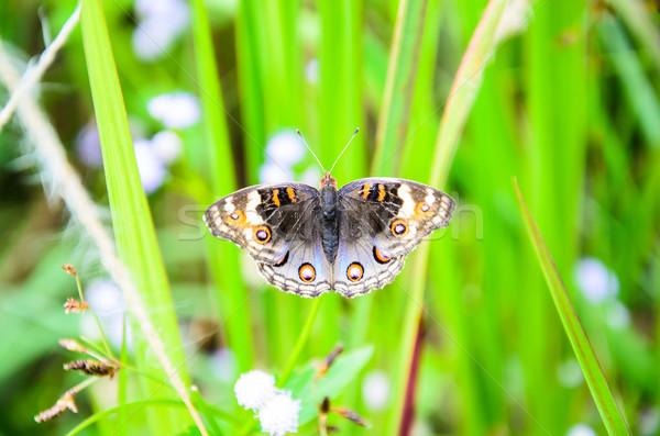 Motyl pływające motyle tropikalnych Rainforest wiosną Zdjęcia stock © chatchai