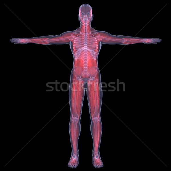 Xray foto persoon pijnlijk spijsvertering spier Stockfoto © cherezoff