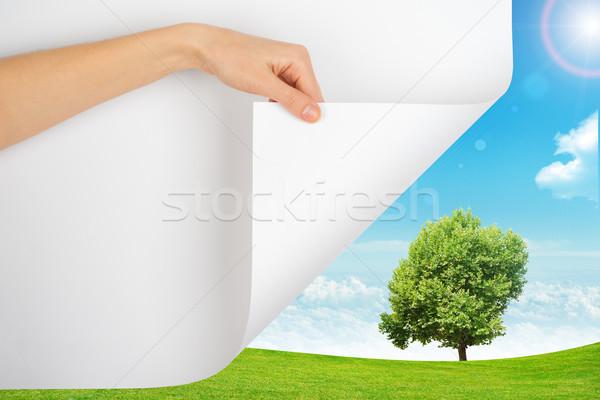 El sayfa doğa ağaç gökyüzü bulutlar Stok fotoğraf © cherezoff