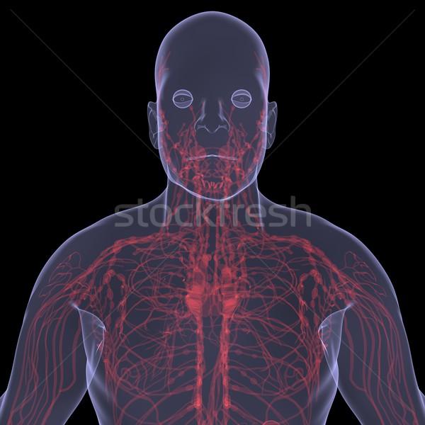 Xray foto persoon pijnlijk spijsvertering geïsoleerd Stockfoto © cherezoff