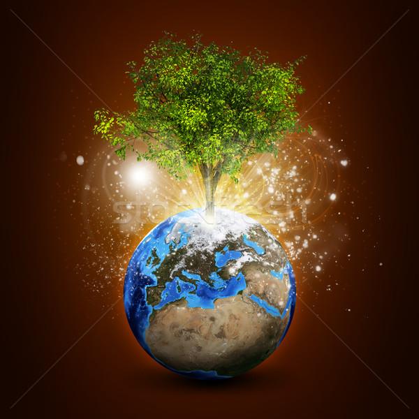 Föld varázslatos zöld fa sugarak fény sötét Stock fotó © cherezoff