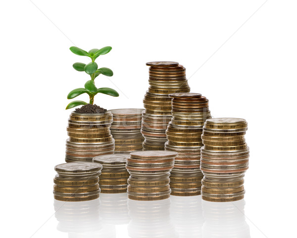 Stack of coins with money tree Stock photo © cherezoff