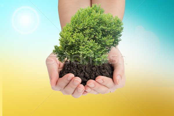 Womans hands holding green tree with mould Stock photo © cherezoff