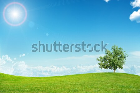 Stock photo: Green  hill on it are three tree. In distance hot air balloons