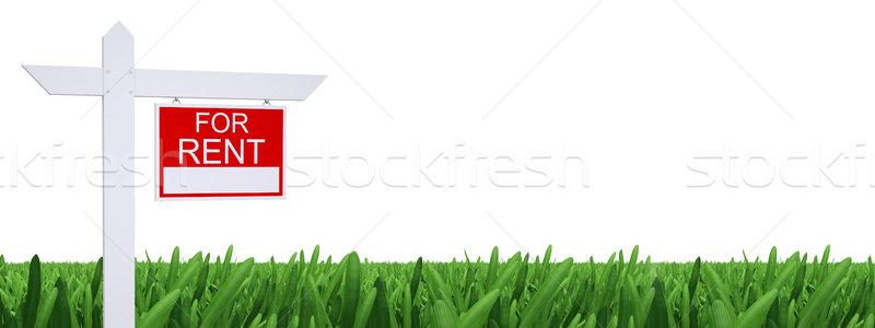 Felirat bérlés zöld fű fehér háttér zöld Stock fotó © cherezoff