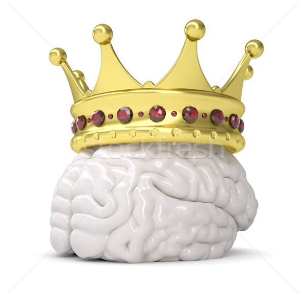 Korony mózgu odizolowany oddać biały medycznych Zdjęcia stock © cherezoff