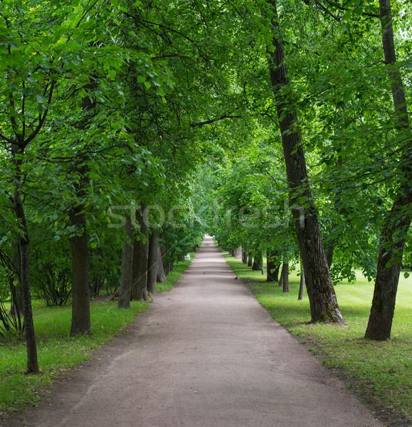 Park út hosszú zöld fák Stock fotó © cherezoff