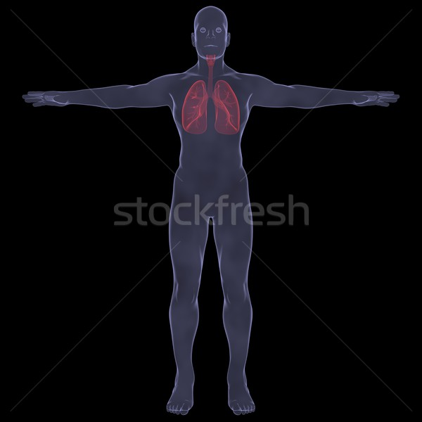 Raio x quadro pessoa dolorido digestão isolado Foto stock © cherezoff