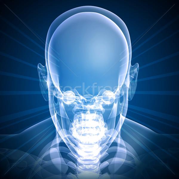 Front face skull x-ray image Stock photo © cherezoff