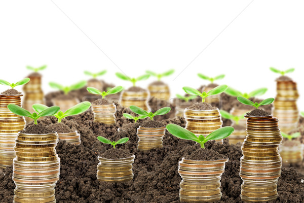 Pile of golden coins with ground and green plant Stock photo © cherezoff