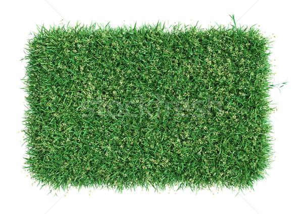 Zielona trawa dziedzinie łące szablon projektu symbol Zdjęcia stock © cherezoff