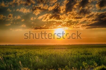 Mező zöld fű naplemente viharos felhők hdr Stock fotó © cherezoff