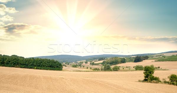 Panoráma mezők megművelt növények napfelkelte naplemente Stock fotó © cherezoff