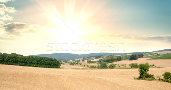 Panorama campos cultivado plantas nascer do sol pôr do sol Foto stock © cherezoff
