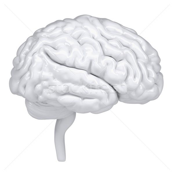 3D fehér emberi agy oldalnézet izolált render Stock fotó © cherezoff
