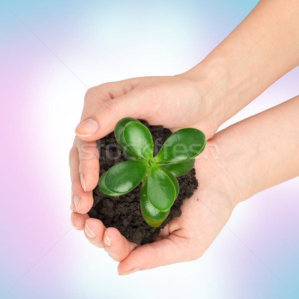 Humans hands holding plant with ground, top view Stock photo © cherezoff