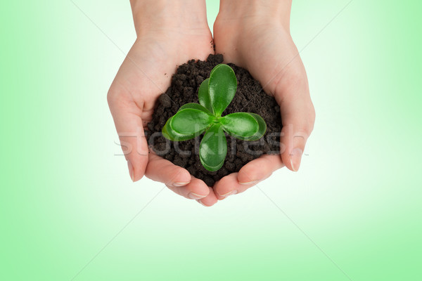 Womans hands holding plant, top view Stock photo © cherezoff