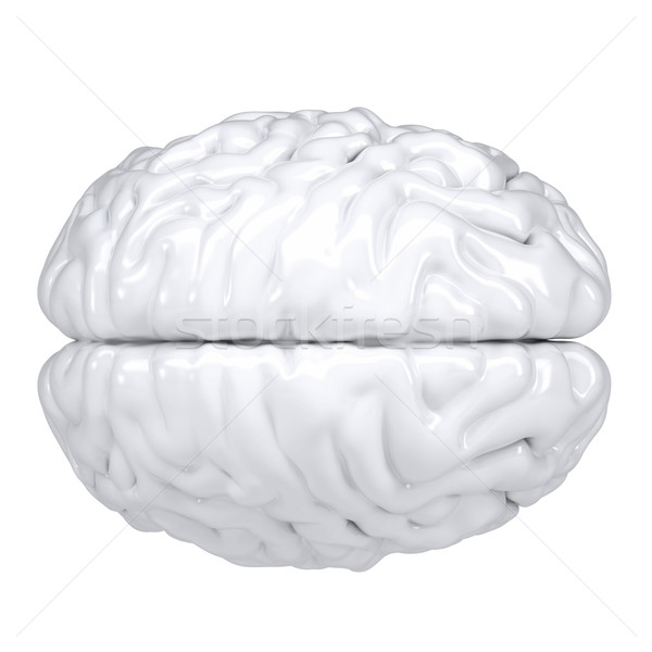 3d white human brain. View from above Stock photo © cherezoff