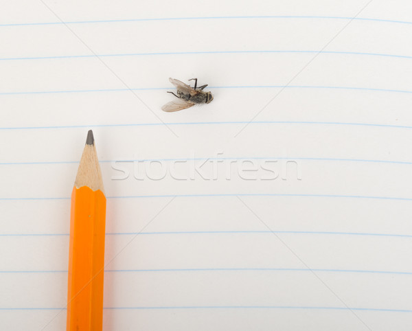 Schönschreibheft Bleistift fliegen Ansicht Papier Stock foto © cherezoff