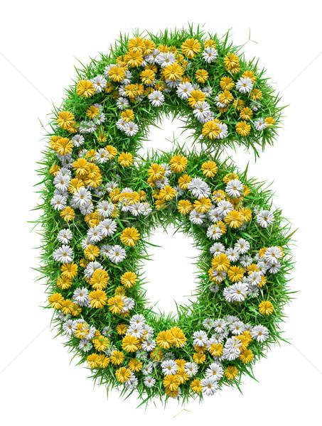 Stockfoto: Aantal · groen · gras · bloemen · geïsoleerd · witte · 3d · illustration