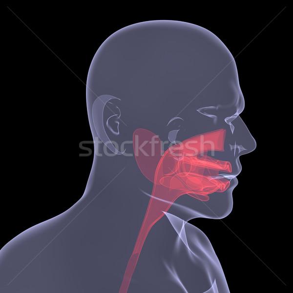 Röntgen kép személy sebes emésztés izolált Stock fotó © cherezoff
