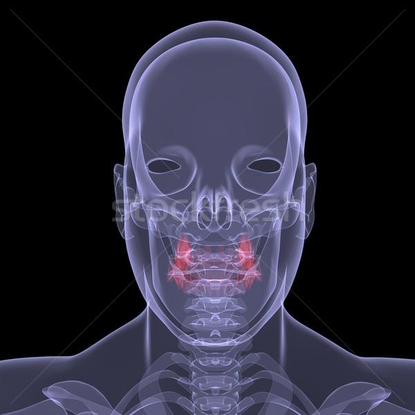 Xray фотография человек пищеварение изолированный Сток-фото © cherezoff