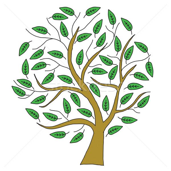 Esboço marrom árvore folhas verdes isolado branco Foto stock © cherezoff