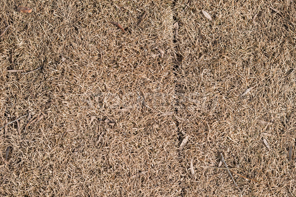 Dry brown lifeless grass Stock photo © cherezoff