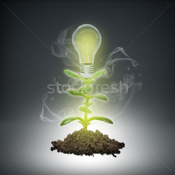 Hoop grond plant lamp grijs Stockfoto © cherezoff