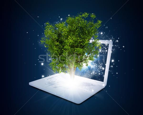Laptop magisch groene boom stralen licht donkere Stockfoto © cherezoff