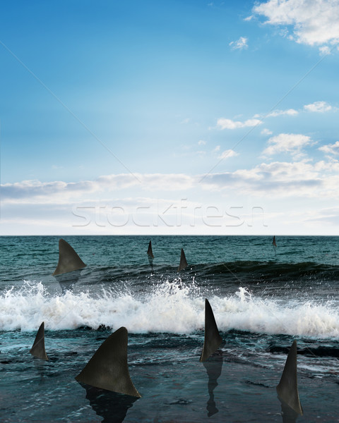 Sharks in sea Stock photo © cherezoff