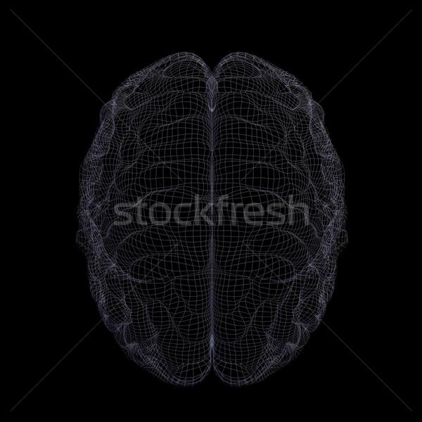 Isolé noir médicaux cerveau Photo stock © cherezoff