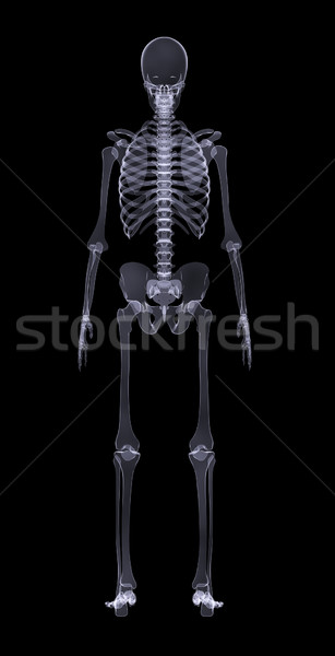 Human skeleton on black, rear view Stock photo © cherezoff