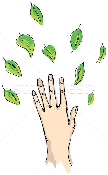 человеческая рука листьев белый дерево стороны Сток-фото © cherezoff