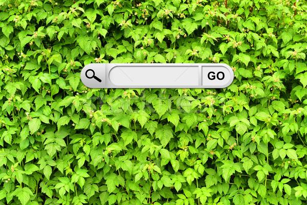 Keresés bár böngésző fal zöld ágak Stock fotó © cherezoff