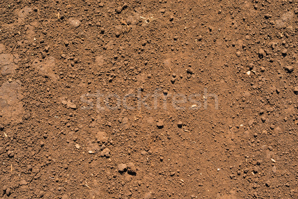 Brown ground surface Stock photo © cherezoff