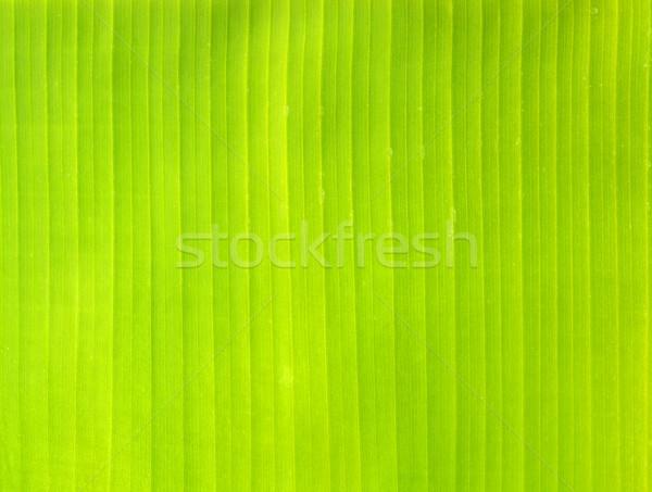 Friss zöld pálmalevél természet textúra fa Stock fotó © cherezoff