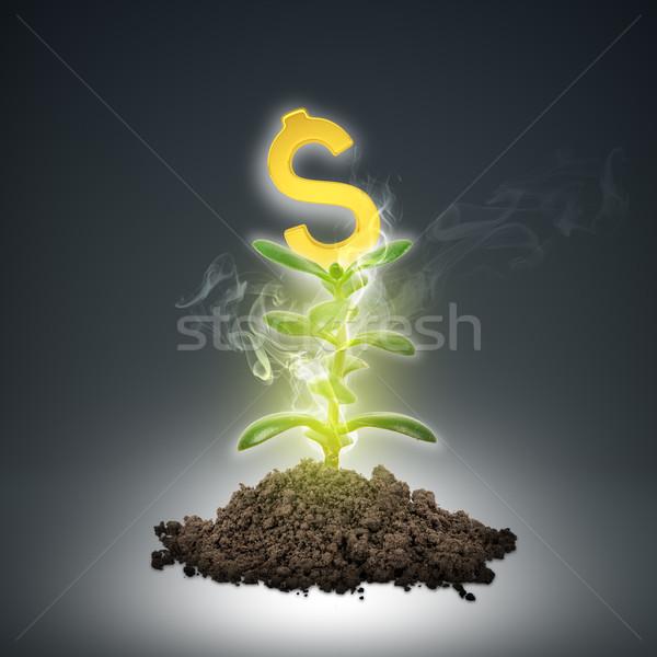 Zemin yeşil bitki dolar işareti altın soyut Stok fotoğraf © cherezoff