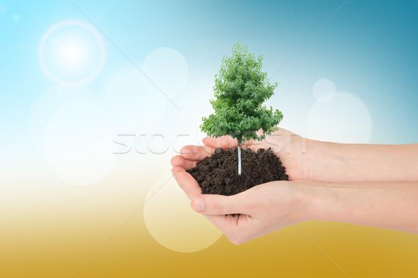 Humans hands holding tree Stock photo © cherezoff
