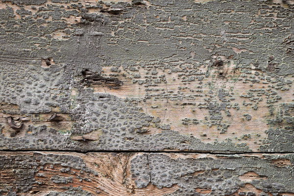 Wood texture background, bad condition Stock photo © cherezoff