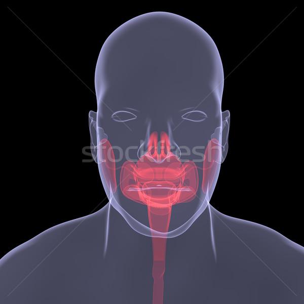 Stock fotó: Röntgen · kép · személy · sebes · emésztés · izolált