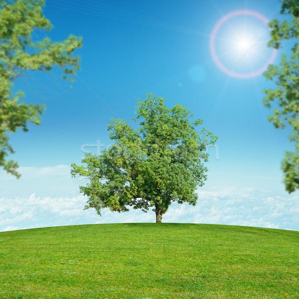Landschap groen gras zon groene bomen blauwe hemel Stockfoto © cherezoff