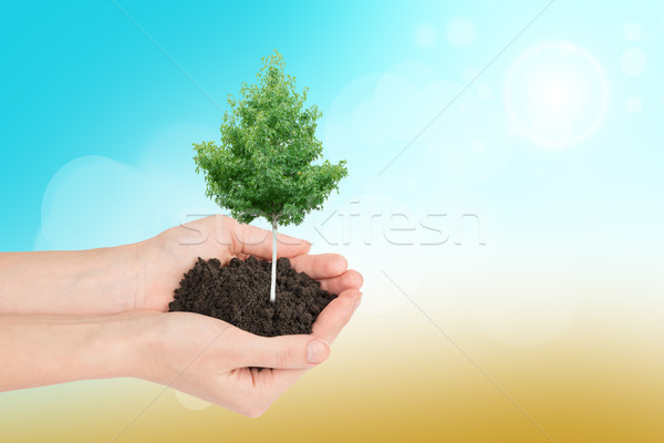 Humans hands holding tree and ground Stock photo © cherezoff