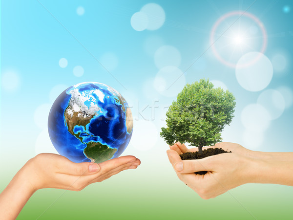 Humans hands holding green tree and Earth Stock photo © cherezoff
