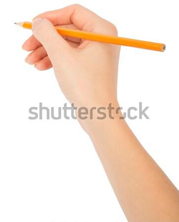 Humans hand holding yellow pencil Stock photo © cherezoff