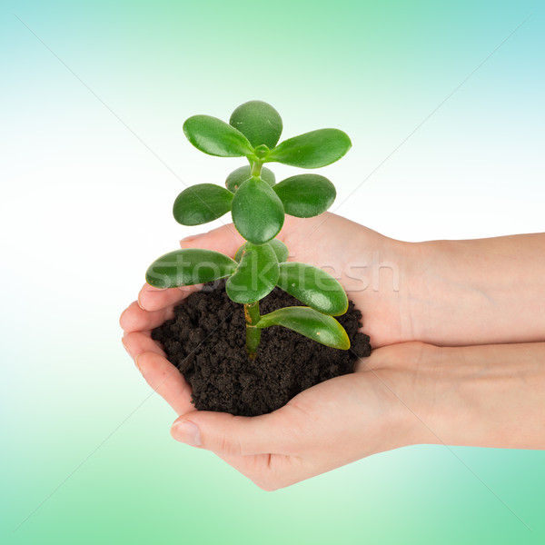 Humans hands holding plant with ground Stock photo © cherezoff