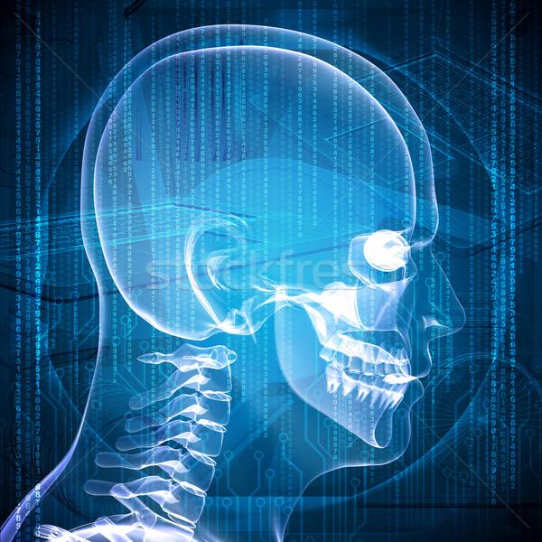 X-ray image of a man's head Stock photo © cherezoff