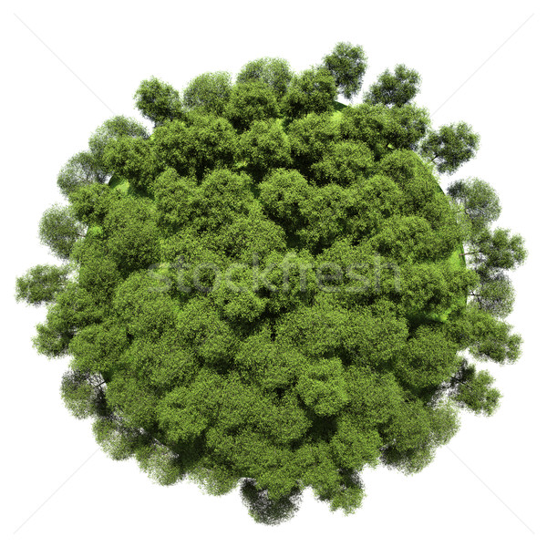 Miniatuur planeet vegetatie geïsoleerd witte boom Stockfoto © cherezoff