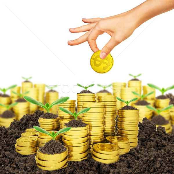 Ttrees growing on stack of coins Stock photo © cherezoff
