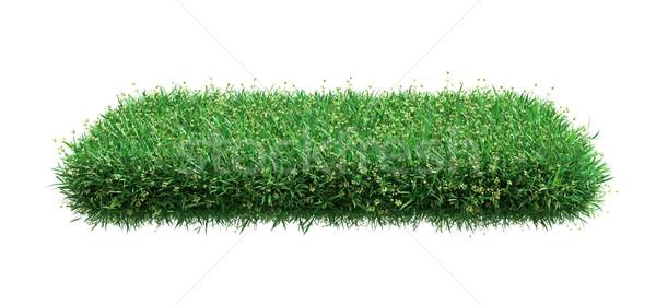 квадратный зеленая трава области белый 3d иллюстрации текстуры Сток-фото © cherezoff